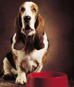 dog-and-bowl11