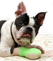 dog-bandage11