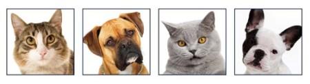 animals-header2