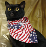 bombay-cat-obama