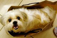 shopping-dog