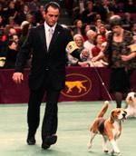 wkc-dog-show1