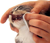 cat-teeth_brushing2