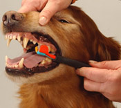 dog-teeth-cleaning1