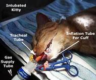 intubatedcat