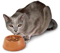 cat-eating1