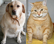 fat-cat-and-dog1