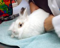 rabbit-vet
