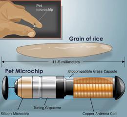 microchip11