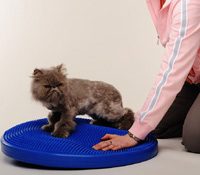 cat-exercise-small