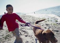 walkthedog