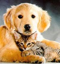 cat-dog2