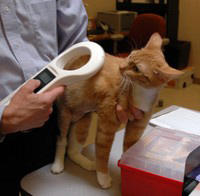 cat with microchip reader