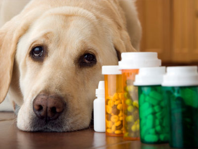 Dog Medication