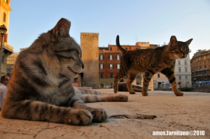 cats-Rome