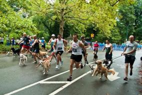 Animal Medical Center Doggy Dash participants
