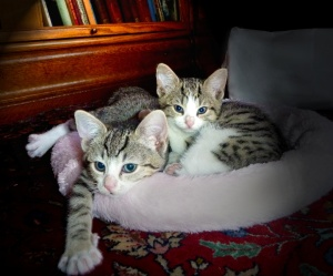 kittens in pink bed