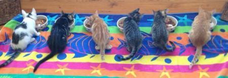 Howard Stern's foster kittens