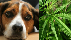pot for pets image