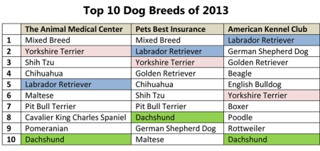 top 10 dog breeds 2013