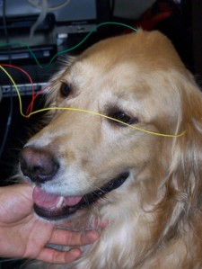 Dog with BAER electrodes attached