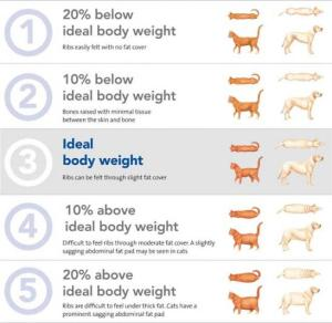 weight loss for pets