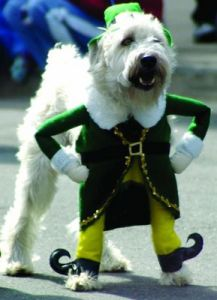St. Patrick's Day for Pets